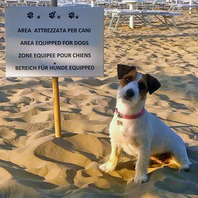Area cani
